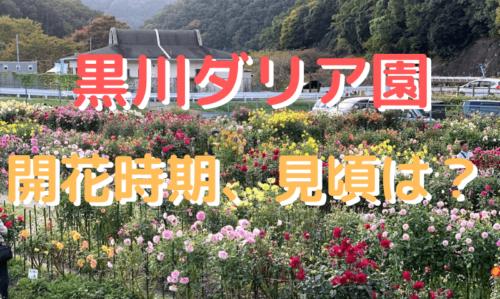 【黒川ダリア園】開花時期、見頃は?輝くダリアをご紹介!