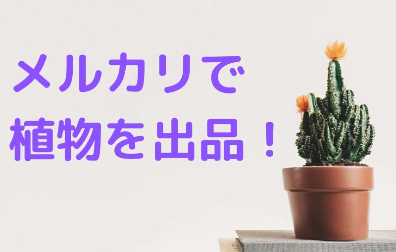 メルカリで植物は出品できる?発送方法、注意点は?