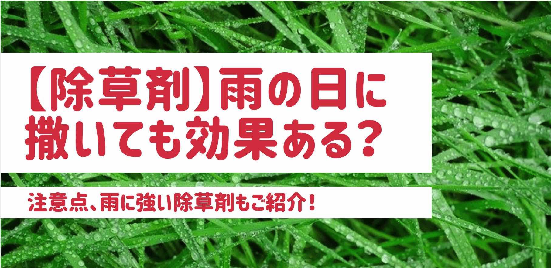 【除草剤】雨の日に撒いても効果ある?|雨に強い除草剤もご紹介!