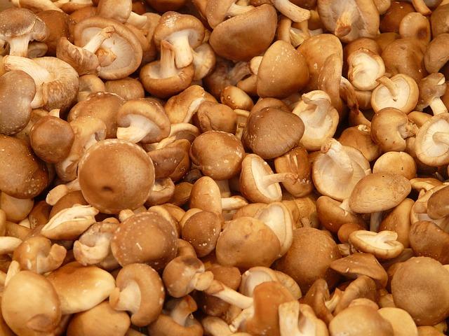 シイタケ、シメジ、エノキ|キノコの生食がダメな理由とは?