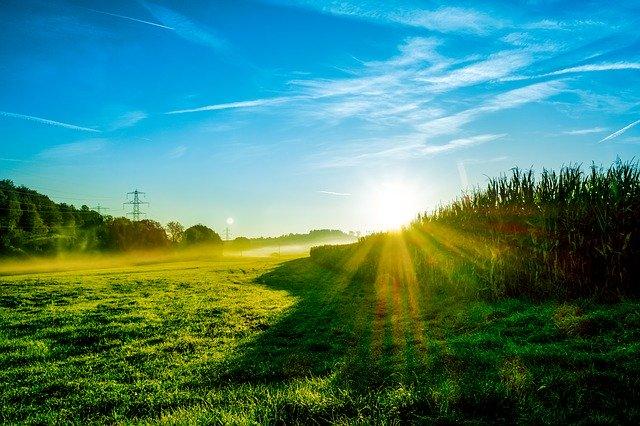家庭菜園が失敗する理由は光?|日光の重要性を理解しよう