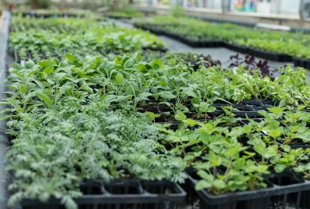 種苗法の改正と種の未来|私たちの生活に影響は?