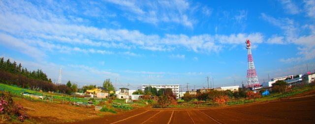 都市型農業とは|メリット、デメリット、新規就農に向いている!?